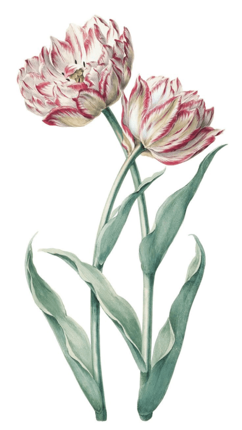 Глава IV. Дом. Сады и цветы